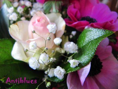 Fleur St V