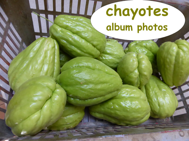 chayotes, album photos