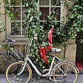vélo, végétation_3080