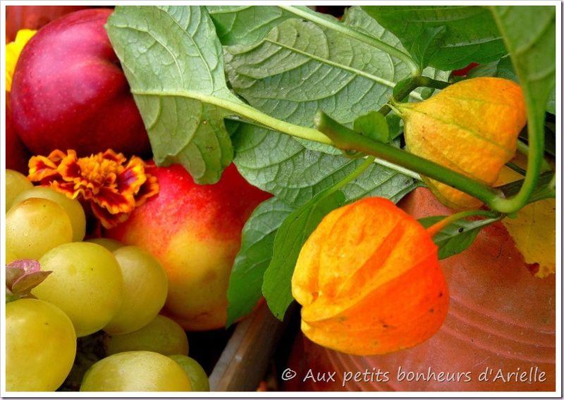 Couleurs d'automne (13)