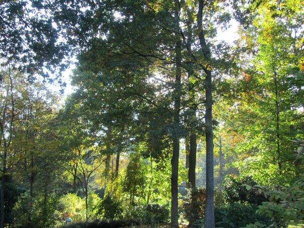 Le jardin prend ses couleurs d'automne