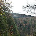 Un jour en forêts d'Aspe Barétous, le 21 novembre 2012...