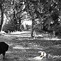 2012-01-Promenade