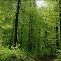 L'éveil de la forêt