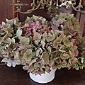 Open-Live-Writer/Automne_D544/hortensias_thumb