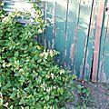 23-10-11 La cabane de jardin