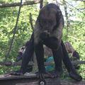 la vallée des singes 0591