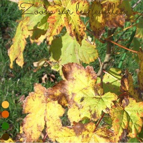 feuille-couleur-automne