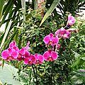 orchidee 1 reduit