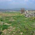 Champ de Jonquilles vers le domaine du Sauvage 2 - Trajet Le Falzet - Saint Alban sur Limagnole