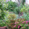 Jardin des pivoines