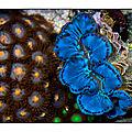 La photographie d'aquarium: de belles photos pour tous! (2/3)
