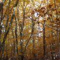 2009 10 31 Dans les bois au milieu des Fayards (Hêtres) (3)