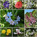 Windows-Live-Writer/cc37ec99af6b_FD24/fleurs Nicole_thumb