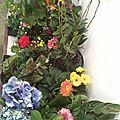 Mes fleurs adorées