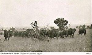 Ouganda éléphants