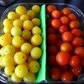 des tomates cerises de deux couleurs