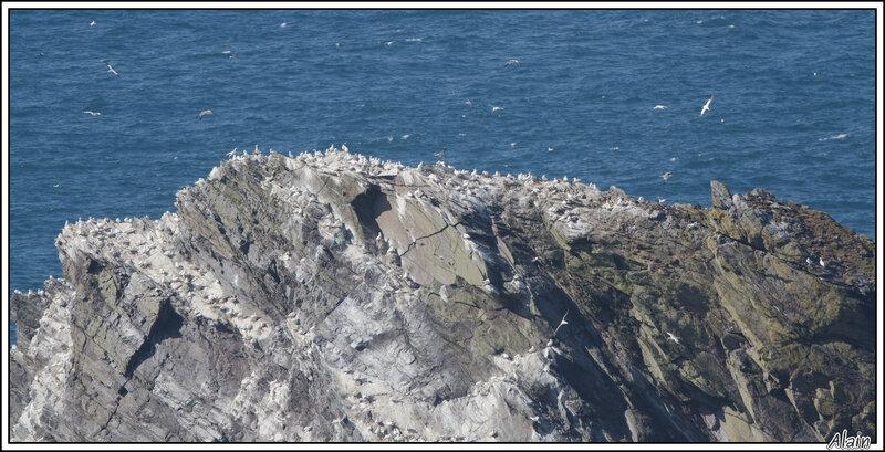 un rocher bien occupé