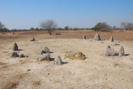 Zambie (230)
