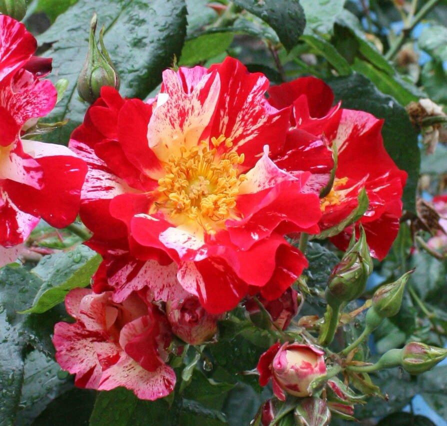 03 fleur