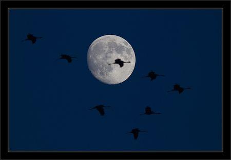 Montier_lulu_grues_lune_debut_nuit_191110