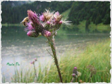 Le_lac_des_Plagnes_E