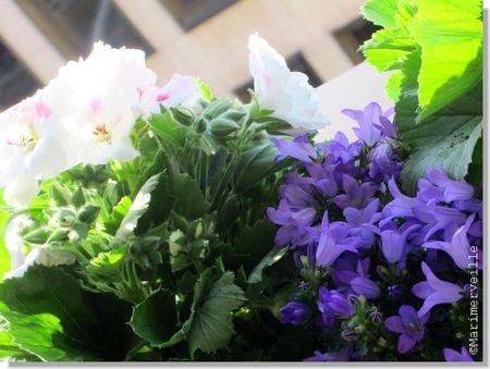 fleurs_0