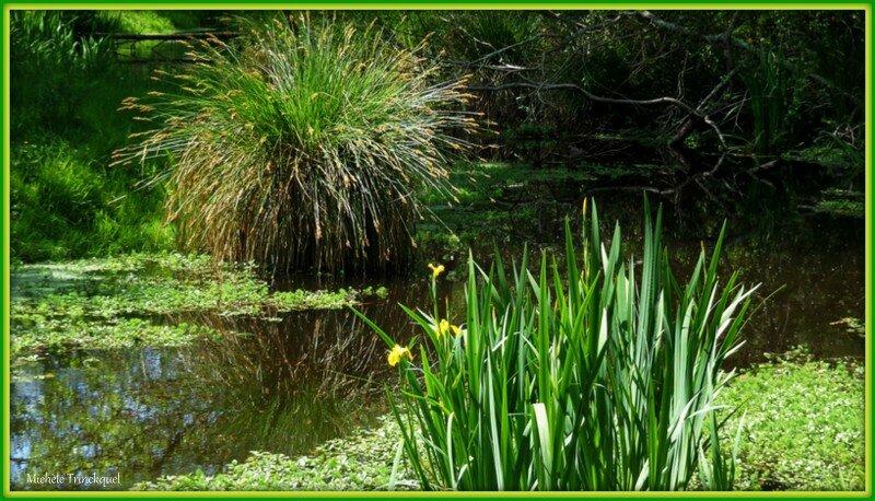 Iris jaunes 2804156