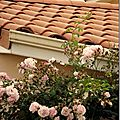 Windows-Live-Writer/jardin_D005/DSCF3906_thumb