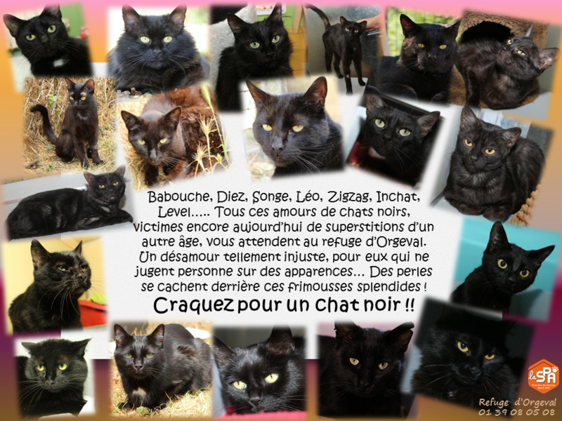 chats_noirs1_0