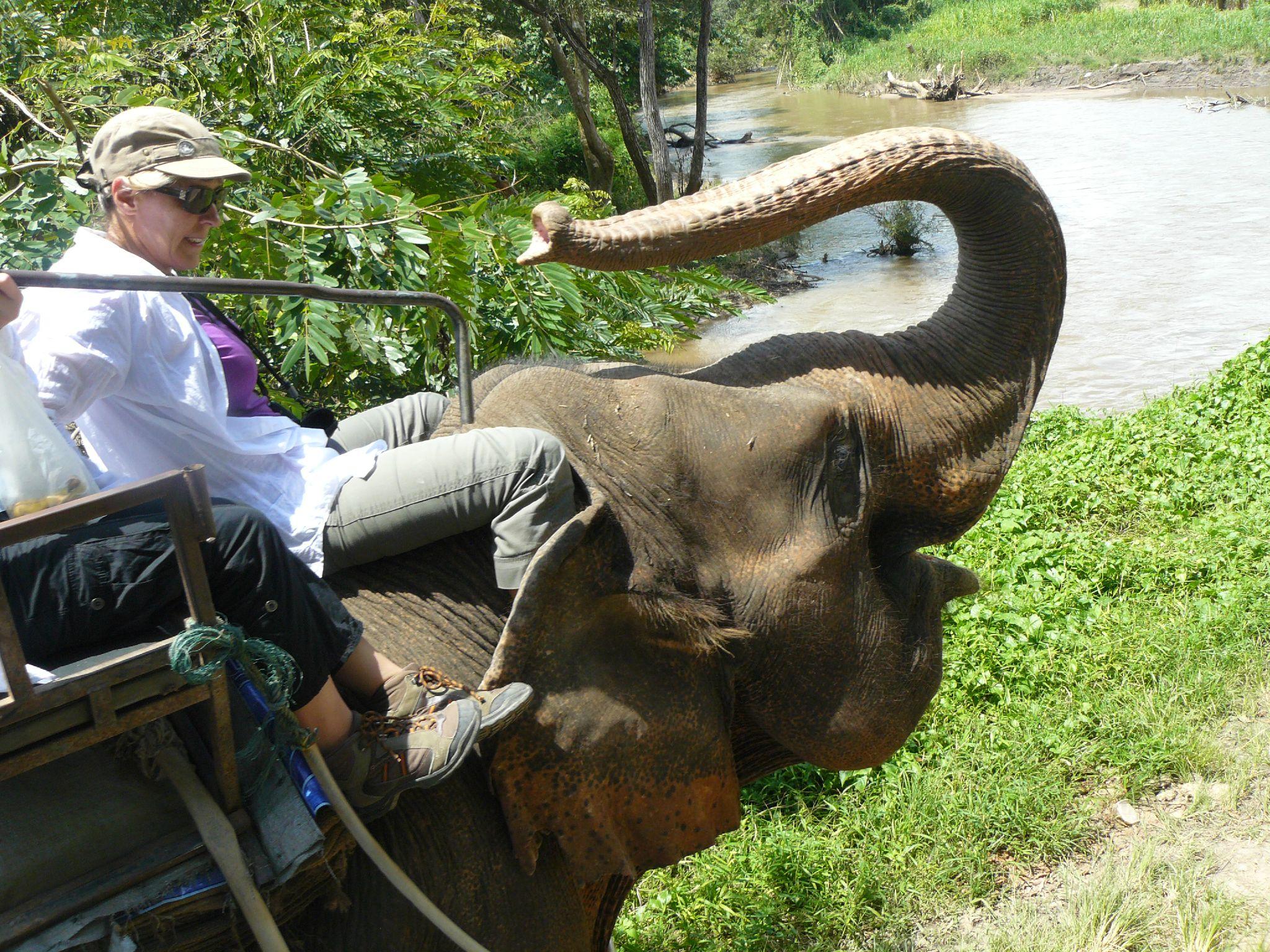 treck eleph P1190387