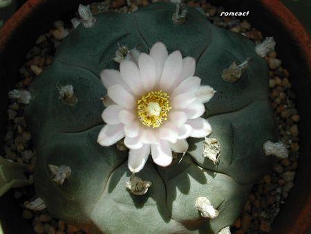 cactus_266
