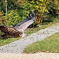 vautour beauval2