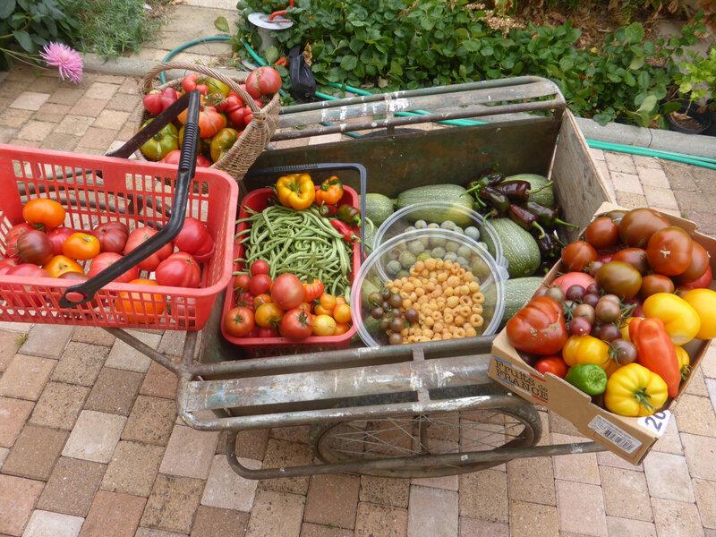 28-récoltes du jour- (3)