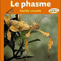 Dcumentaire-Le phasme