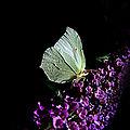 Couleurs de papillons (2)