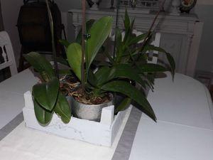 Cagette orchidées (11)