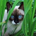 Les chats (126)