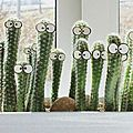 humour cactus