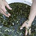La meilleure tisane du puissant guérisseur traditionnel faagan pour dégrosser