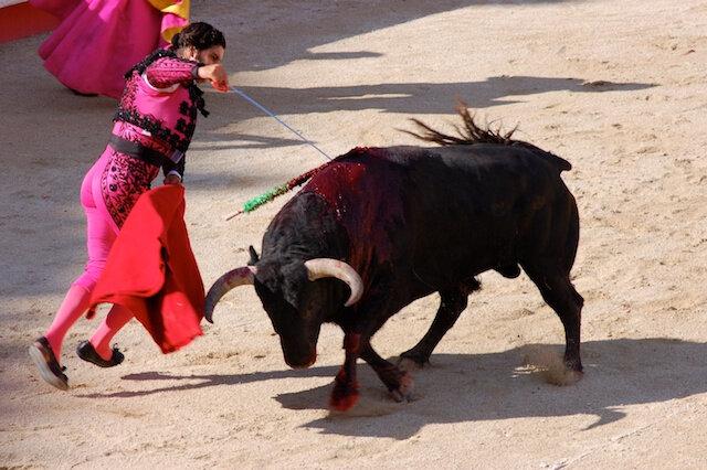 Le taureau: Sonnet d'une mort annoncée