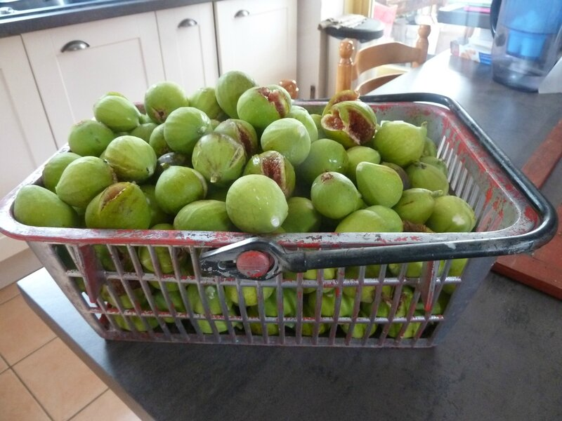 26-figues (3)