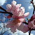 Fleurs du jardin et retour du printemps