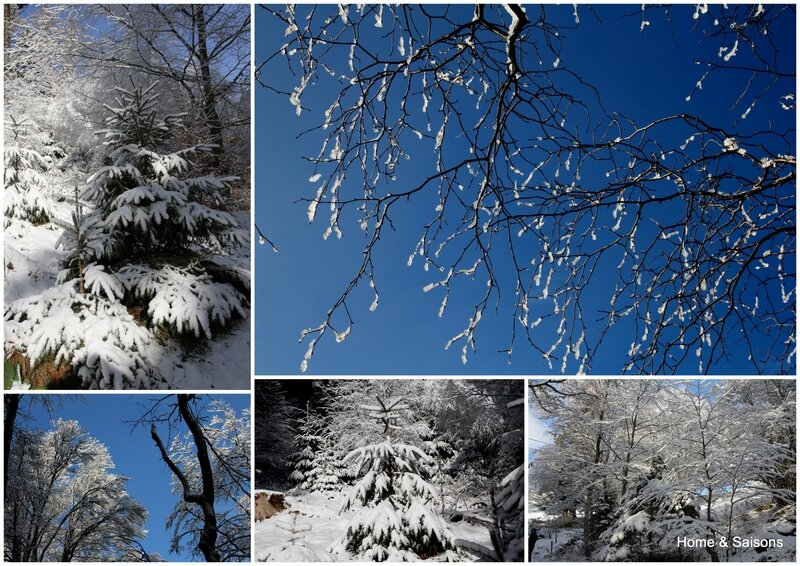 2015-01 Neige Vosges