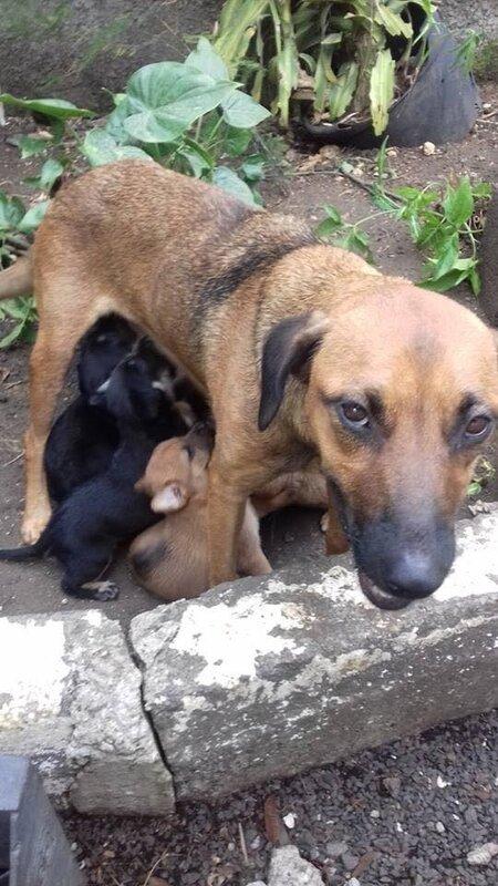 chiens en grand danger sur les Abymes 1