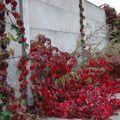 Chemins d'automne