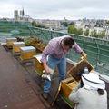 les ruches de la tour d'argent (si si, je vous jure)