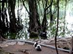 autour et le lac Hoan Kiem (1)