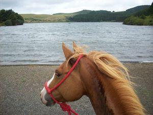 voyage au long cours à cheval - le rêve