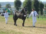 Vidoq du Frutil - 15 Septembre 2012 - Concours des Etalons Boulonnais - Samer - 4e (3 ans petite taille)